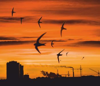 Exhibition of Yuri Zakharov «Birds in the City»