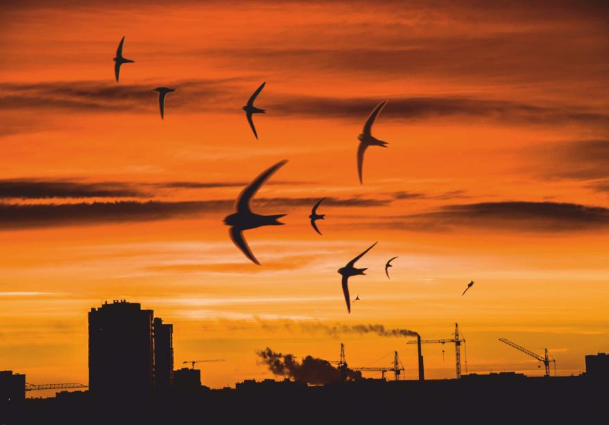 Выставка Юрия Захарова «Птицы в городе»