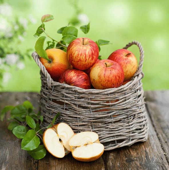 Выставка «Яблочный Спас»