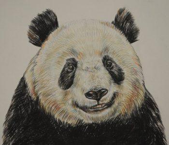 Мастер-класс «Панда цветными карандашами»