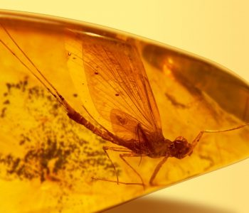 Exhibition «Prehistoric insects in amber»