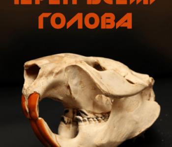 Выставка «Череп всему голова»