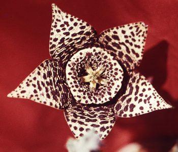 Выставка фотографии Мухамеджанова Гаяза «Галина ушла – цветы её живут»