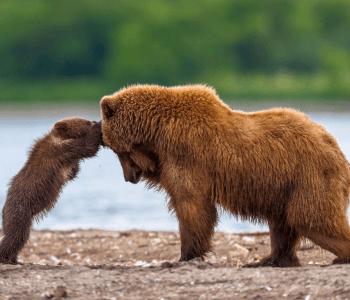 Фотовыставка «Материнство в дикой природе»