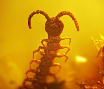 Выставка натуральных янтарных инклюзов «Доисторические насекомые в янтаре»