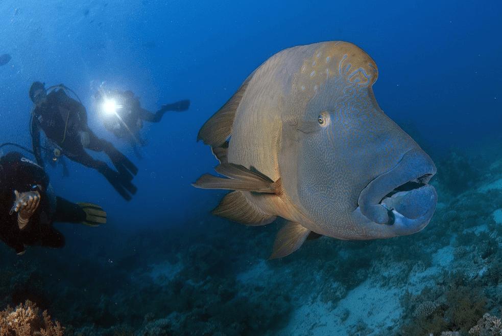 Выставка «100 чудес света: Подводный мир»